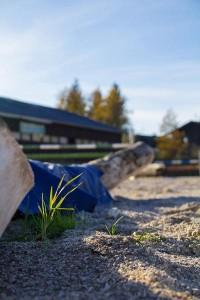 Hindernisse am Springplatz -  Reit- und Zuchthofes Strobl im Salzkammergut