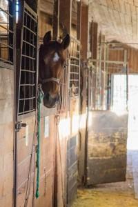 Pferd im Stall  Reit- und Zuchthofes Strobl im Salzkammergut