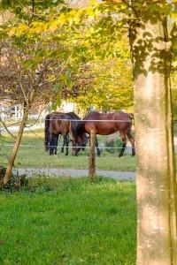 Pferde auf der Koppel am  Reit- und Zuchthofes Strobl im Salzkammergut