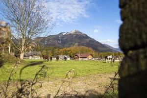 Pferdeherde auf der Weide am  Reit- und Zuchthofes Strobl im Salzkammergut