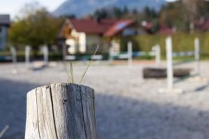 Springplatz des  Reit- und Zuchthofes Strobl im Salzkammergut