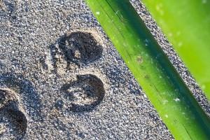Springstange und Hufabdruck auf dem Springplatz des  Reit- und Zuchthofes Strobl im Salzkammergut