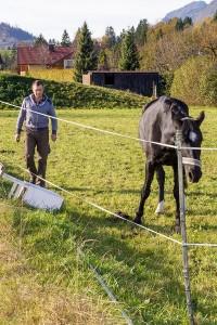 Thomas Hütter und Pferd auf Wiese am  Reit- und Zuchthof Strobl im Salzkammergut